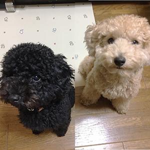 ノアちゃん & チビちゃん