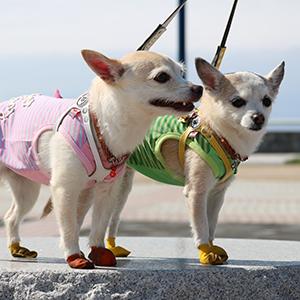 コロンちゃん & チョビちゃん